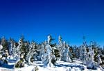 RadichSpindl_SnowTrees_1