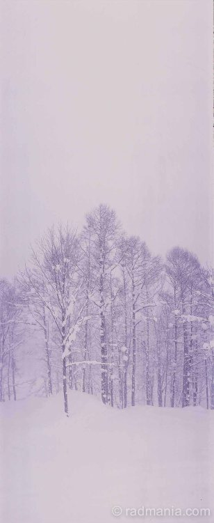 Niseko forest during a blizzard.