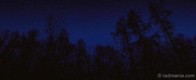 Niseko forest at dusk.
