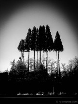Radich NV-Verdi Trees